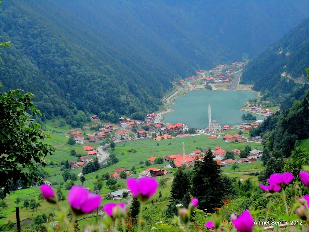 Doğu Karadeniz'de 400 bitki gelir kapısı olacak | Karadeniz ...